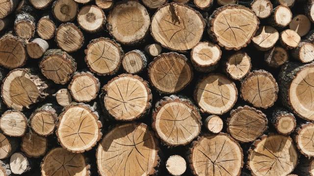 木地板厂家生产中的木材保养