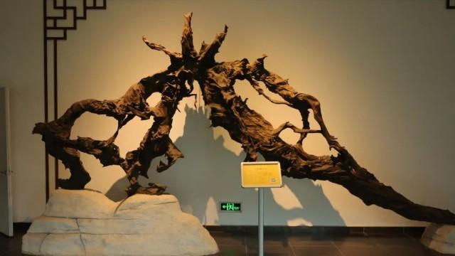 湖州古木博物馆之旅